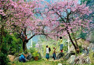 Mộc Châu các mùa hoa1 300x207 - Mộc Châu các mùa hoa