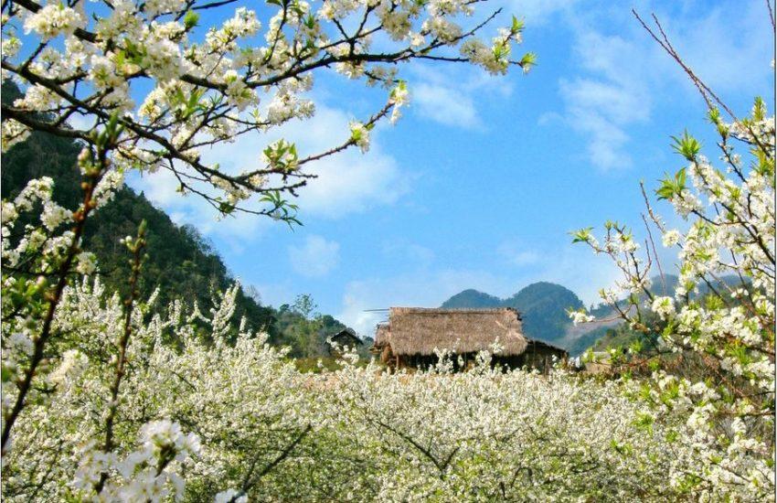 Mộc Châu các mùa hoa2 850x550 - Mộc Châu các mùa hoa