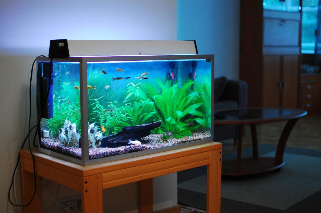 Tìm hiểu từ A – Z về máy lọc bể cá đang được bán phổ biến hiện nay 2 1024x681 - Tìm hiểu từ A – Z về máy lọc bể cá đang được bán phổ biến hiện nay